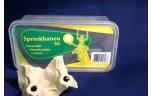 Sprinkhanen, Schistocerca gregaria volwassen, maat 8, doosje