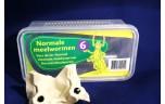 Normale meelwormen, doosje, 25 gr