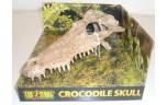Exo Terra, crocodile skull