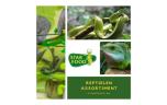 Dendrobates auratus (Green Costa Rica), Gouden gifkikker