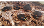 Emydura subglobosa, Roodbuikspitskopschildpad