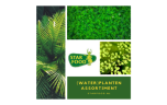 Driftwood (extra large) met 5 planten