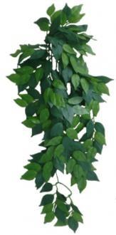 EuroZoo, Ficus, klein